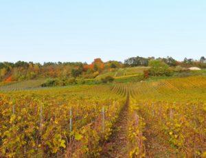 Vignoble Massif de St Thierry